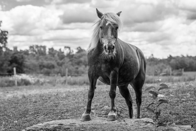Rekindle Your Creativity – Fifteen Minute Photo Walk – Shooting At the Farm